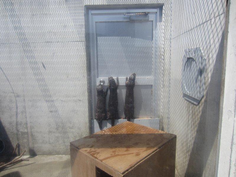 京急油壺マリンパークのカワウソ